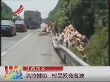货车高速路侧翻 村民哄抢辣椒被撞身亡